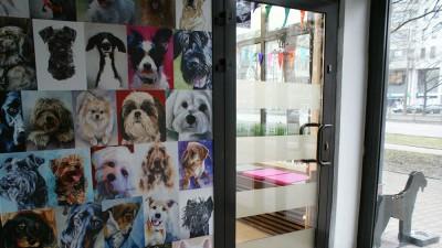 """Malowany Pies - Groomer Strzyżenie Psów Warszawa nazwaliśmy działalność Malowany Pies bo każdy psi klient po zabiegu wygląda """"jak z obrazka"""" :)"""